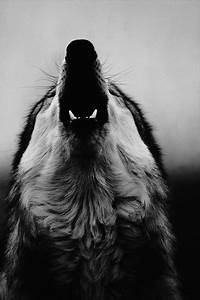 wolf howling on Tumblr