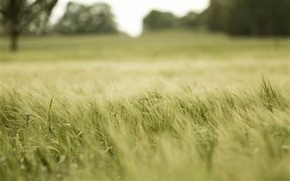 Field Wallpapers Muscatel Backgrounds Widescreen Desktop Grass