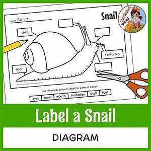Label A Snail Diagram