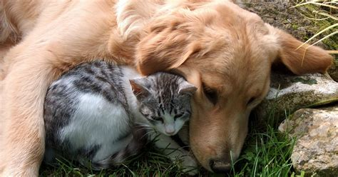 If you have medical records from your vet showing that your pet's condition has been cured for at least six months, you may be able to get it covered. Best Pet Insurance for Pre-Existing Conditions   Revuezzle