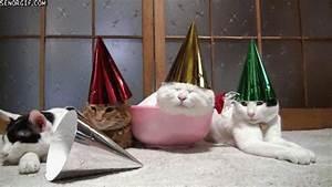 Best Of Week Happy Birthday Cat GIF by Cheezburger - Find ...