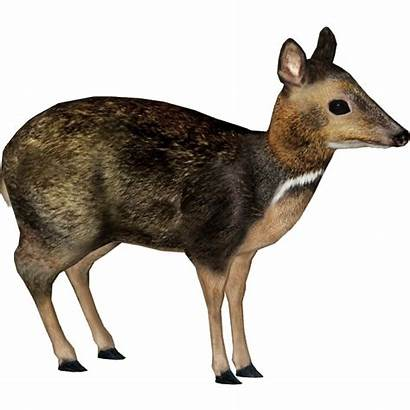Deer Mouse Philippine Zoo Philippines Transparent Clipart