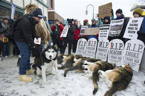 iditarod trail sled dog race mired    doping