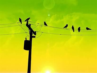 Wire Birds Wallpapers Bird Dyr Morning Faglar