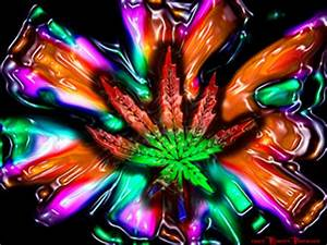 diario de la crisis In weed we Trust