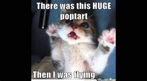 Animal Memes Archives  Page 4 Of 5  The Meme Planet