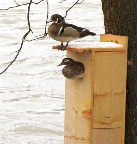 birdhouse  nest box plans   bird species