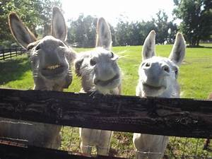 3363 best images about DONKEY`S AND MULES on Pinterest
