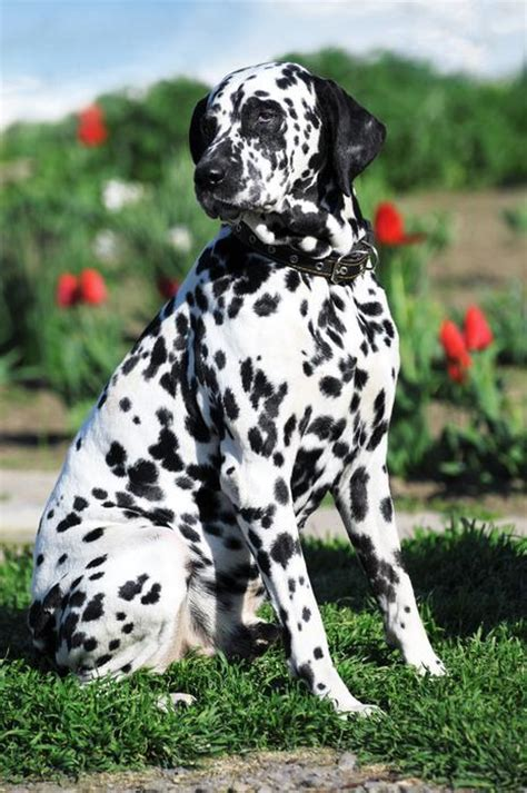 breed recognition animal veterinary science