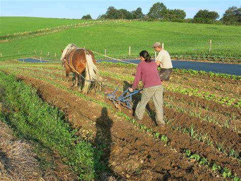 un cheval sur la ferme du quot jardin fertile quot ulule