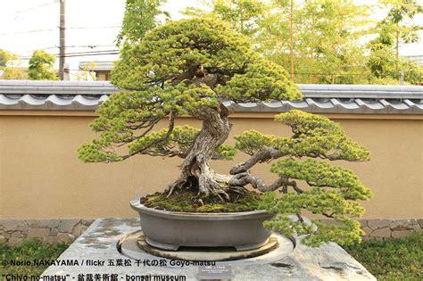 Im Garten Wuchs Der Baum by Outdoor Bonsai Bereichert Jede Gartenanlage Gartenbaum