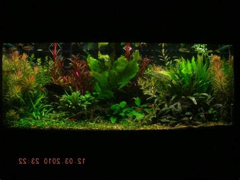 photos large freshwater aquariums