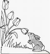 Bun Coloring Flower Buns Coloringpages101 Holidays Template sketch template