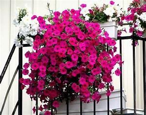Künstliche Blumen Für Balkonkästen : blumenkasten f r balkon verwandeln sie ihren balkon in ~ A.2002-acura-tl-radio.info Haus und Dekorationen