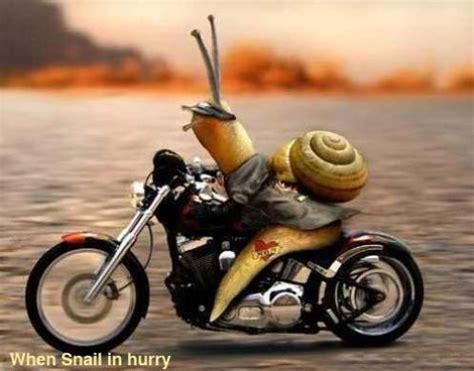 Funny Animals On Bike Beautifu Images 2013