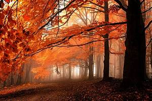 Fall, Path, Mist, Leaves, Forest, Orange, Trees, Nature, Landscape, Wallpapers, Hd, Desktop, And