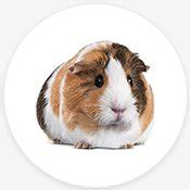 Small Animal Supplies: Products & Accessories for Small