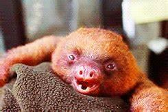 baby sloths baby sloth gif | WiffleGif