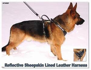 A Chart About Nothing Reflective Sheepskin Lined Leather Harness Activedogs Com