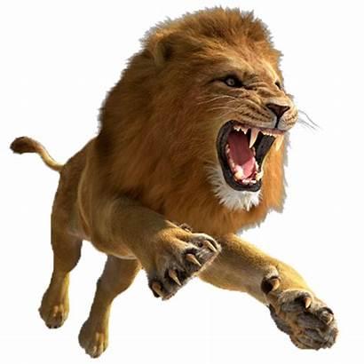 Lion Transparent King Cub Purepng Animals Cc0