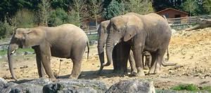 Billet Zoo De Beauval Leclerc : horaire zoo de beauval jours et heures d 39 ouverture ~ Medecine-chirurgie-esthetiques.com Avis de Voitures