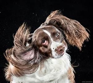 fun photos of dogs shaking by carli davidson