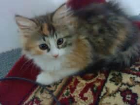 my cats my cat jojo cats photo 20717887 fanpop