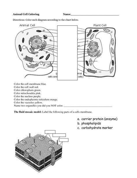 images  parts   plant cell worksheet plant