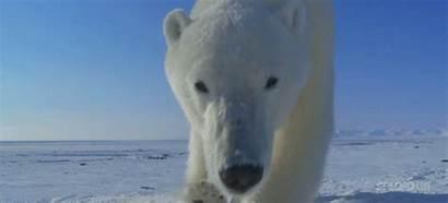 Bbc Tiny Cameras Capture Wildlife Incredible Uses