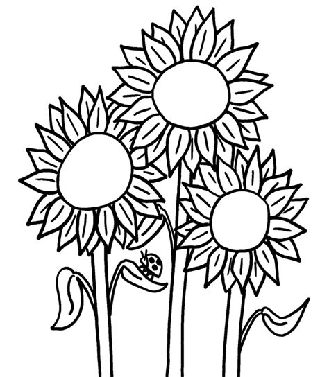 gambar mewarnai bunga matahari dengan crayon