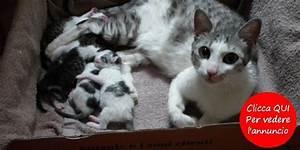 Cucciolo di cane e cuccioli di gatto da adottare Petpassion Blog