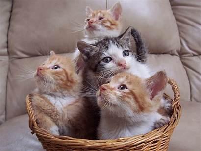Cats Fanpop Assortment Cat Kittens Kitten Kitty