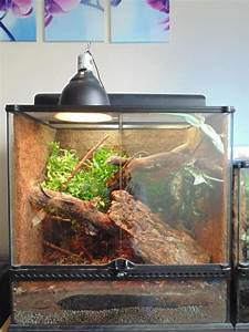 Giant day gecko and full setup   Newton Aycliffe, County ...