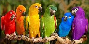 Bright, Colored, World, -, Bright, Colors, Photo, 17445854