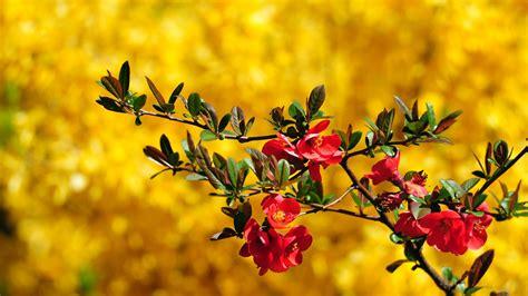 Flower Wallpaper Hd For Desktop Free Download Wallpaper