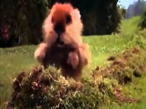 Gopher from cad... Caddyshack Gopher