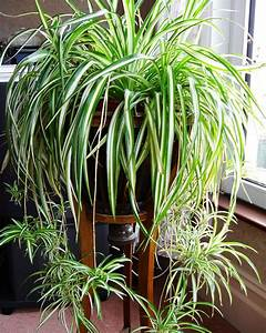 15, Easy, To, Grow, Houseplants, For, Beginners