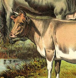 Cows Printable Farmhouse Style The Graphics Fairy