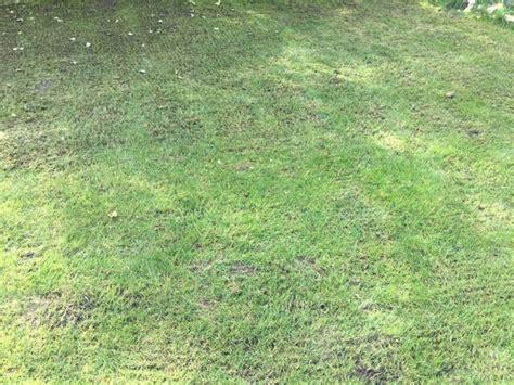 Garten Umgraben Und Düngen Im Herbst by Rasen Im Herbst M 228 Hen Vertikutieren Und D 252 Ngen Hausbau