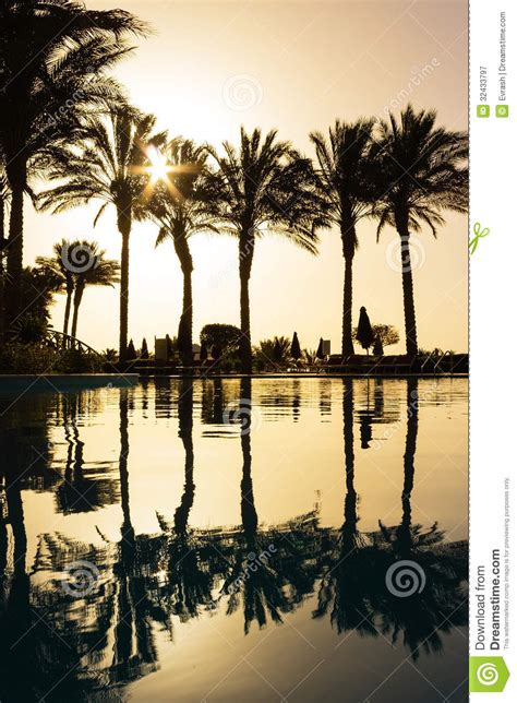 reflection  silhouettes  palm trees   pool water