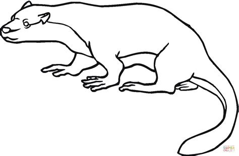 North American River Otter Coloring Page Free Printable