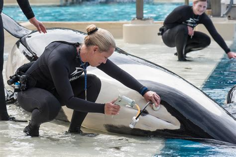 scientists bemoan seaworld decision to stop orcas science news us news