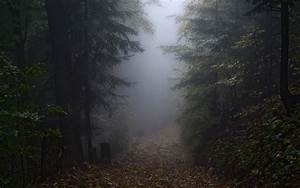 Landscape, Nature, Mist, Morning, Fall, Path, Forest