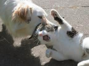 cats vs dogs amazing creatures