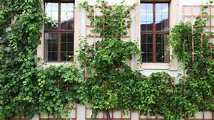 Dekorative Bäume Für Kleine Gärten : malerisch begr nt kletterpflanzen f r kleine g rten ~ Markanthonyermac.com Haus und Dekorationen