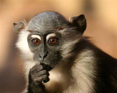 Animals Zoo Park: Baby Monkey Wallpapers, Monkey Baby ...