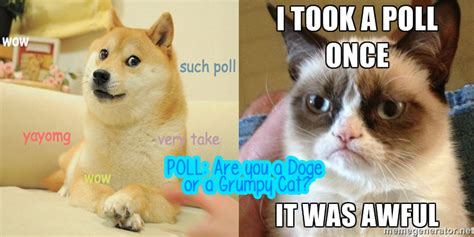 Poll Are You A Doge Or A Grumpy Cat? Yayomg