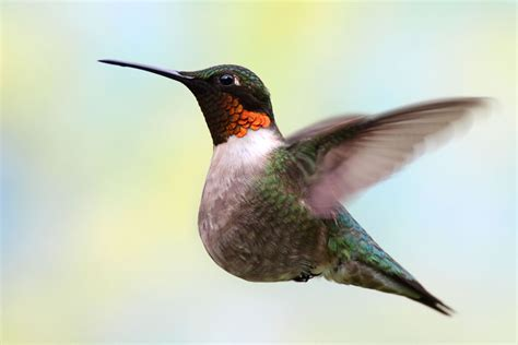 it s okay to be smart heavy hummingbirds and their