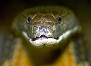 Desktop Hd Wallpaper Snake Black Mamba