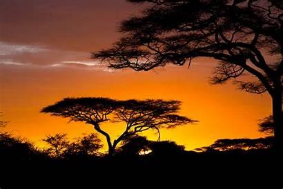 Safari African Africa Sunrise Nature Wallpapers Wallpapersafari